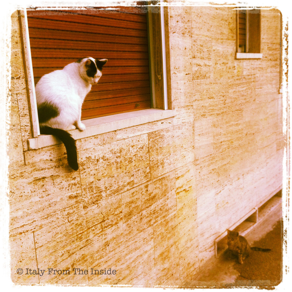 Cats in Italy- Italy from the Inside