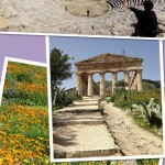 Our 8 day trip in Sicily. Eigth day: Segesta and back home…